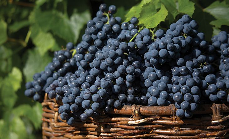 виноград pinterest co uk