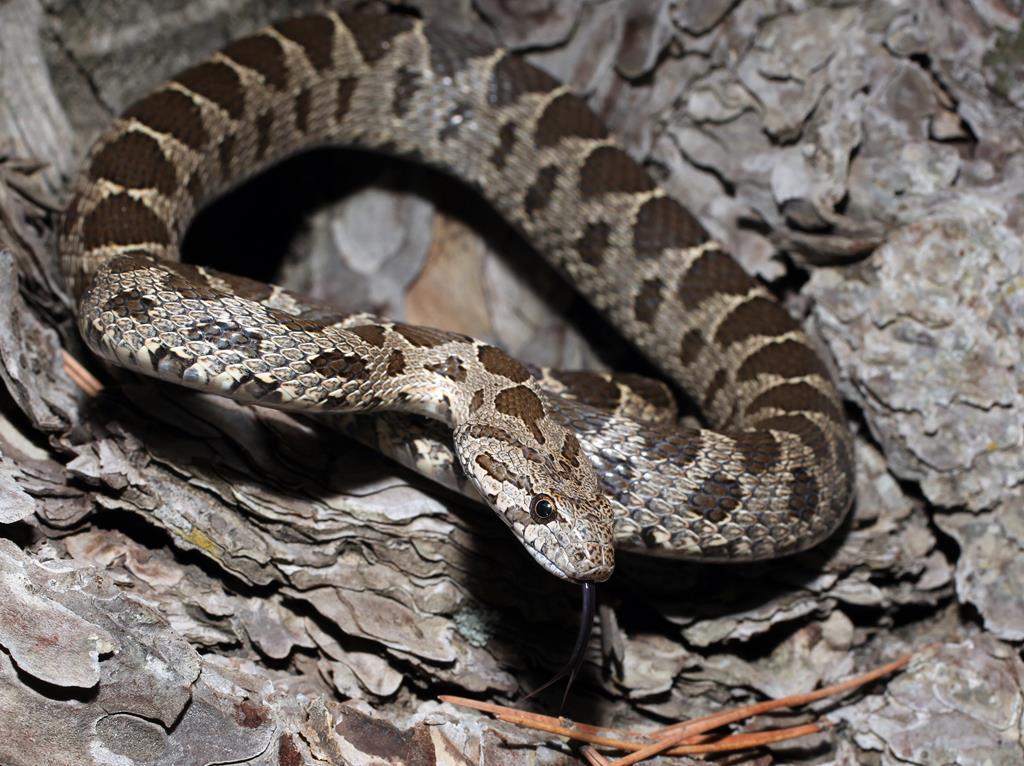 змеи кипра фото стройные представительницы