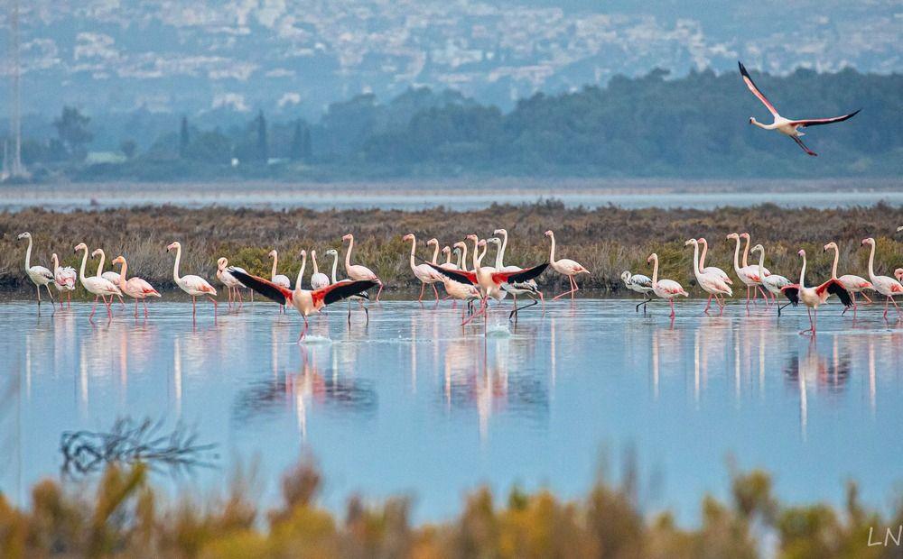 кованые розы озеро в ларнаке куда прилетают фламинго фото строения пигментации чешуек